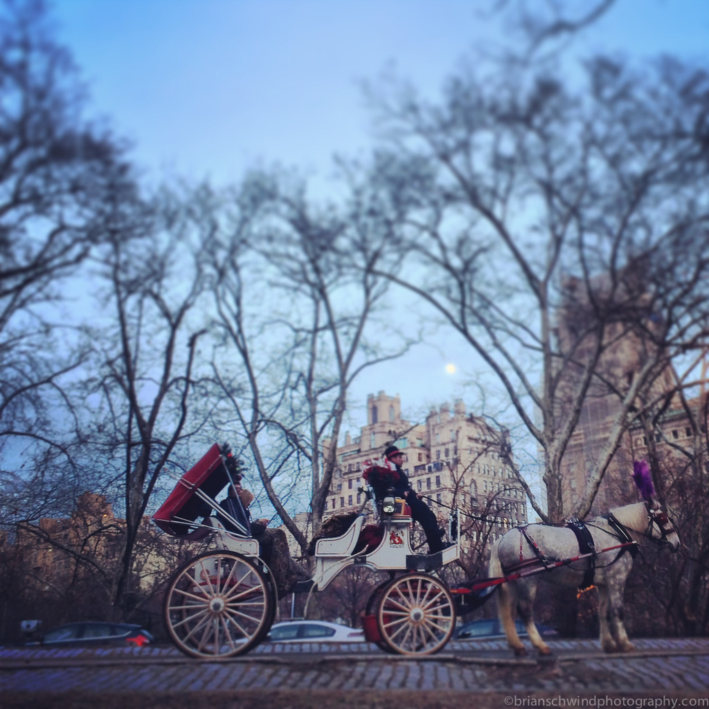 America, New York, New York City, North America, Park, Places, USA, United States, carriage, city, horse, iPhone
