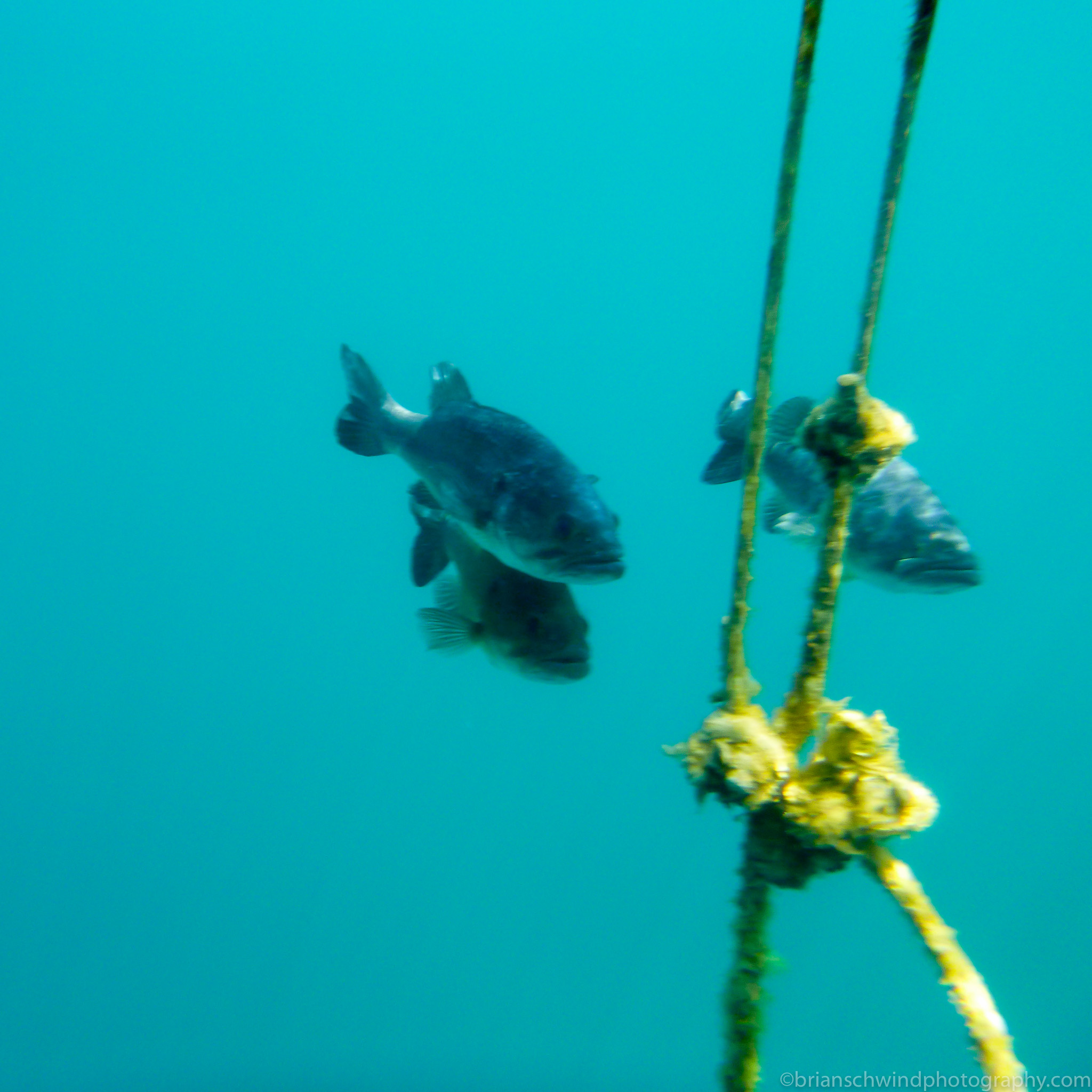Bass under the Buoy Dutch Springs 2015